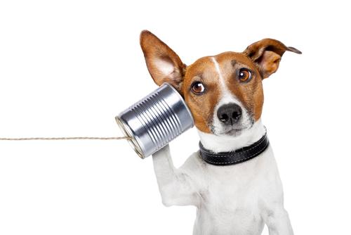 Cachorro ouvindo