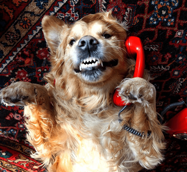 Ele está cãoversando ao telefone. Hã. Hã. Pegou o trocadilho? Cão... versando!
